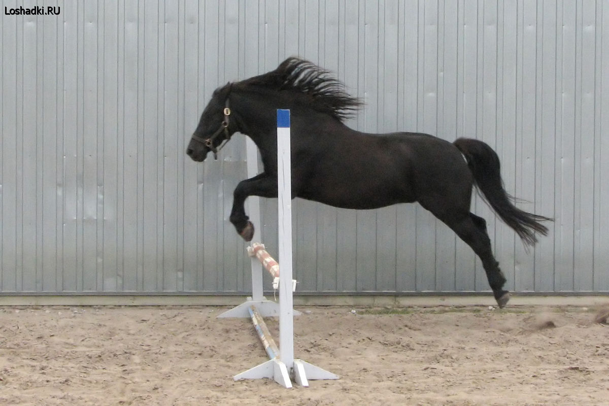 http://www.loshadki.ru/data/media/3/horses2.jpg